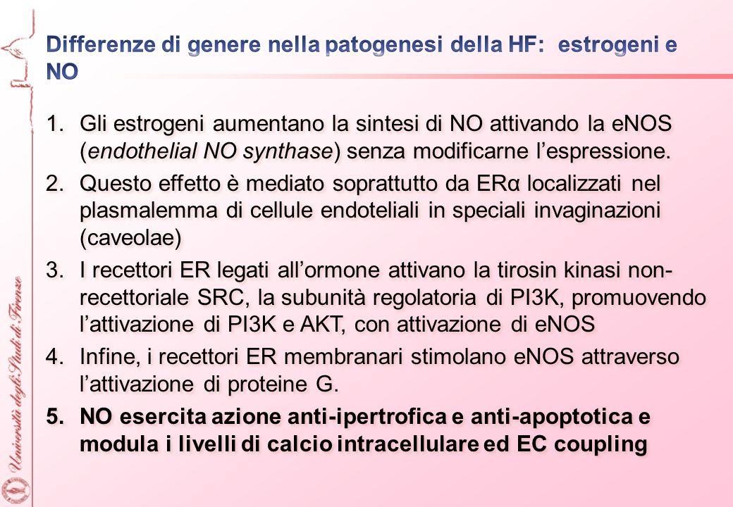 1.Gli estrogeni aumentano la sintesi di NO attivando la eNOS (endothelial NO synthase) senza modificarne lespressione. 2.Questo effetto è mediato sopr