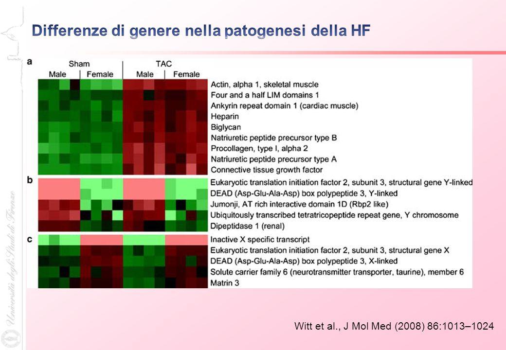 Witt et al., J Mol Med (2008) 86:1013–1024