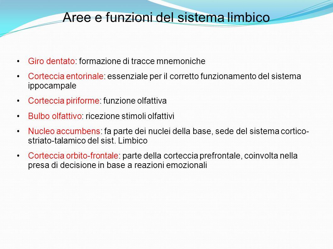 Aree e funzioni del sistema limbico Giro dentato: formazione di tracce mnemoniche Corteccia entorinale: essenziale per il corretto funzionamento del sistema ippocampale Corteccia piriforme: funzione olfattiva Bulbo olfattivo: ricezione stimoli olfattivi Nucleo accumbens: fa parte dei nuclei della base, sede del sistema cortico- striato-talamico del sist.