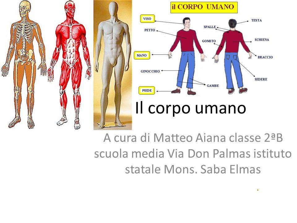 Il corpo umano A cura di Matteo Aiana classe 2ªB scuola media Via Don Palmas istituto statale Mons. Saba Elmas