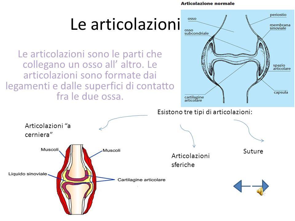 Le articolazioni Le articolazioni sono le parti che collegano un osso all altro. Le articolazioni sono formate dai legamenti e dalle superfici di cont