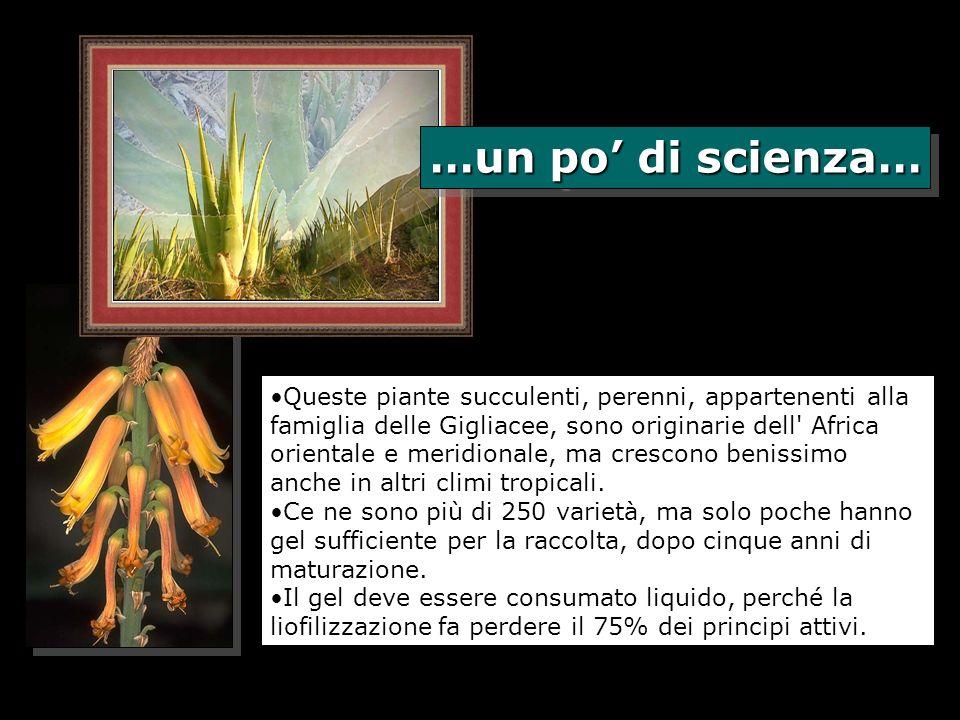 Queste piante succulenti, perenni, appartenenti alla famiglia delle Gigliacee, sono originarie dell' Africa orientale e meridionale, ma crescono benis