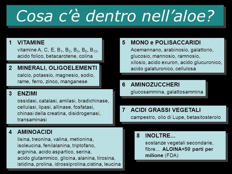Cosa cè dentro nellaloe? 1VITAMINE vitamine A, C, E, B 1, B 2, B 3, B 6, B 12, acido folico, betacarotene, colina 1VITAMINE vitamine A, C, E, B 1, B 2