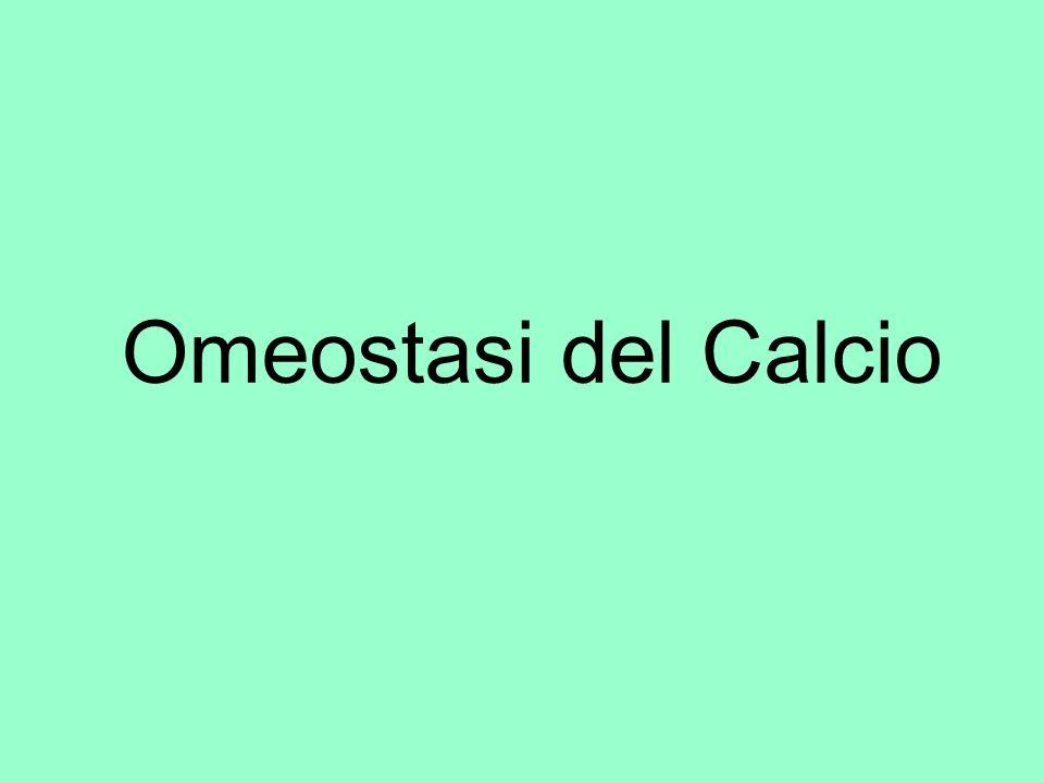 Il Ca intracellulare (1) Dentro le cellule il Ca è in quantità molto bassa (< di 10 μEq/L) ma è essenziale per le funzioni biologiche Si lega alle membrane biologiche e alle proteine (miosina, calbindina, troponina C, carriers…).