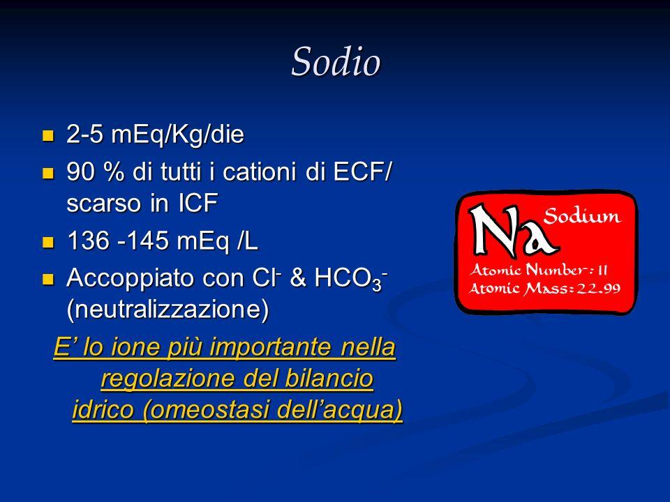 Sodio 2-5 mEq/Kg/die 2-5 mEq/Kg/die 90 % di tutti i cationi di ECF/ scarso in ICF 90 % di tutti i cationi di ECF/ scarso in ICF 136 -145 mEq /L 136 -1