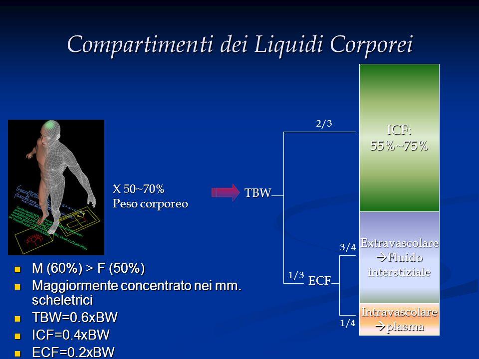 Composizione delle Secrezioni GI: Source Volume (ml/24h) Na +* K+K+K+K+ Cl - HCO 3 - Salivary 1500 (500~2000) 10 (2~10) 26 (20~30) 10 (8~18) 30 Stomach 1500 (100~4000) 60 (9~116) 10 (0~32) 130 (8~154) 0 Duodenum100~20001405800 Ileum3000 140 (80~150) 5 (2~8) 104 (43~137) 30 Colon100-90006030400 Pancreas100-800 140 (113~185) 5 (3~7) 75 (54~95) 115 Bile50-800 145 (131~164) 5 (3~12) 100 (89~180) 35 * Concentrazione media: mmol/L