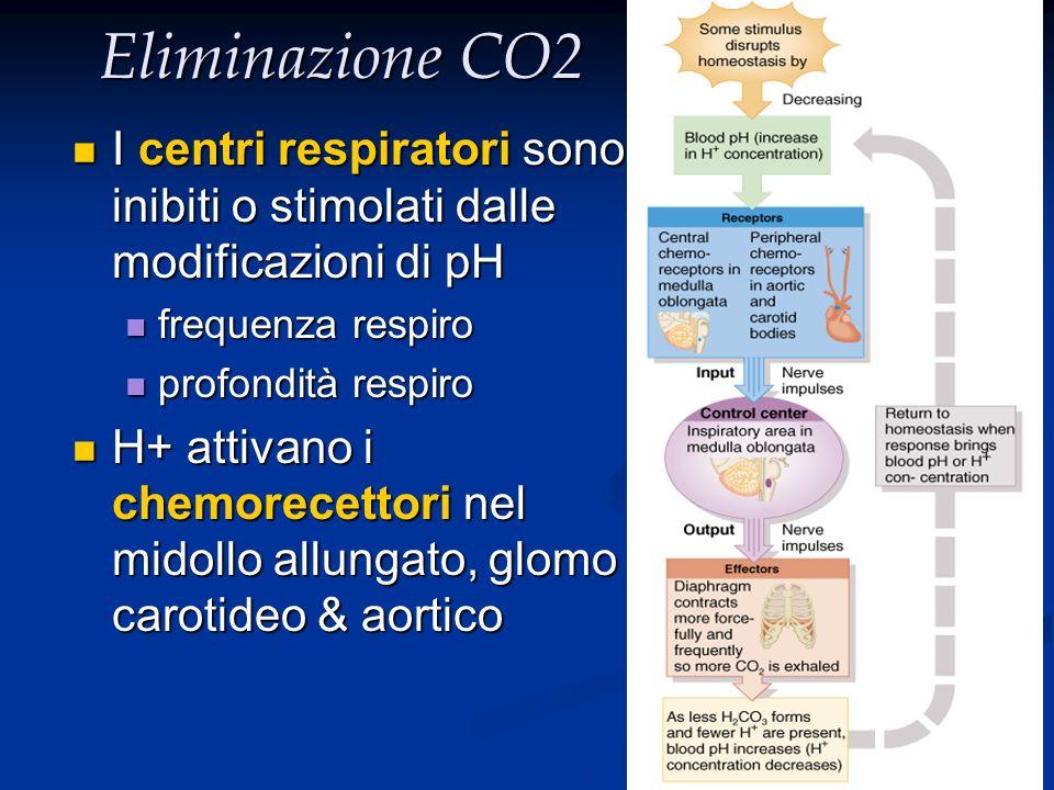 Eliminazione CO2 I centri respiratori sono inibiti o stimolati dalle modificazioni di pH I centri respiratori sono inibiti o stimolati dalle modificaz