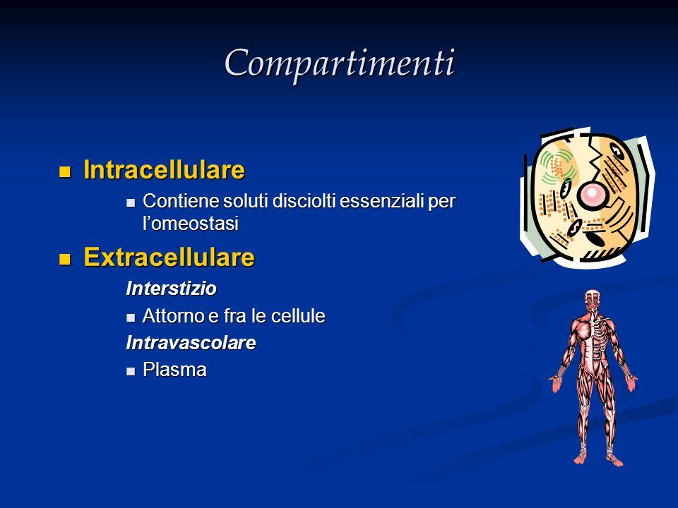 Compartimenti Intracellulare Intracellulare Contiene soluti disciolti essenziali per lomeostasi Contiene soluti disciolti essenziali per lomeostasi Ex