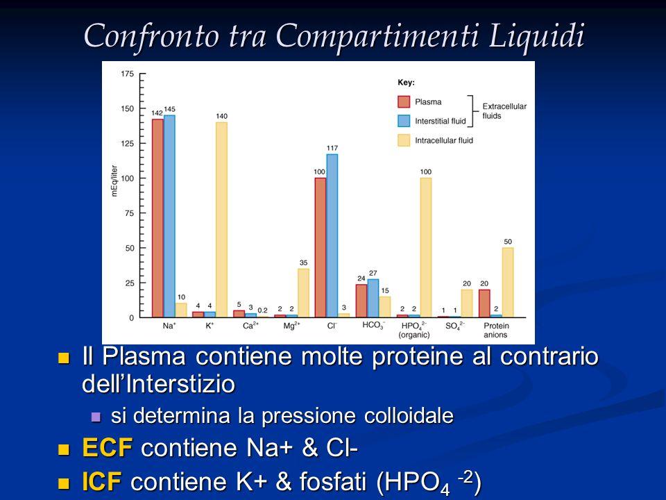 Composizione dei Liquidi Corporei: Ca 2+ Mg 2+ K+K+ Na + Cl - PO 4 3- Organic anion HCO 3 - Protein 0 50 100 150 100 150 CationsAnions ECF ICF Osmolarità = soluto/(soluto+solvente) Osmolarità = soluto/(soluto+solvente) Osmolalità = soluto/solvente (290~310mOsm/L) Osmolalità = soluto/solvente (290~310mOsm/L) Tonicità = osmolalità effettiva Tonicità = osmolalità effettiva Osmolalità plasmatica = 2 x (Na) + (Glucosio/18) + (Urea/2.8) Osmolalità plasmatica = 2 x (Na) + (Glucosio/18) + (Urea/2.8) Tonicità plasmatica = 2 x (Na) + (Glucosio/18) Tonicità plasmatica = 2 x (Na) + (Glucosio/18)