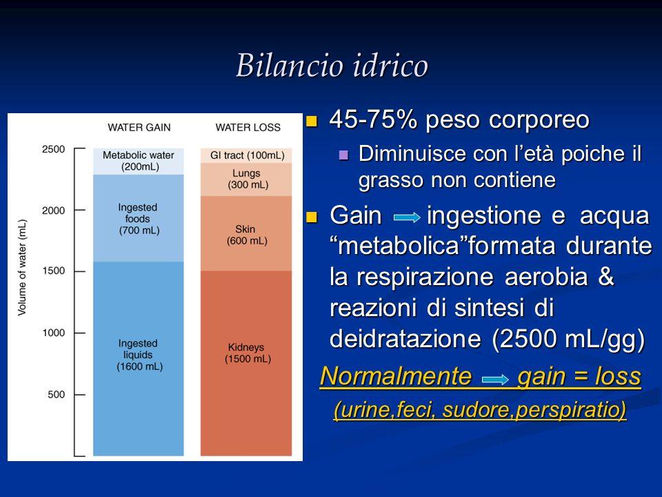 Bilancio idrico 45-75% peso corporeo 45-75% peso corporeo Diminuisce con letà poiche il grasso non contiene Diminuisce con letà poiche il grasso non c