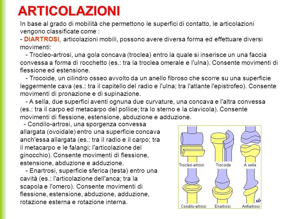 In base al grado di mobilità che permettono le superfici di contatto, le articolazioni vengono classificate come : - DIARTROSI, articolazioni mobili,