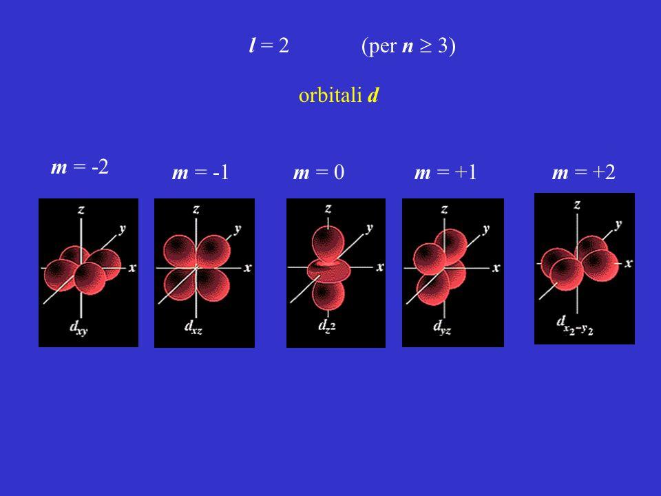 l = 2 (per n 3) m = -2 m = -1m = 0m = +1m = +2 orbitali d