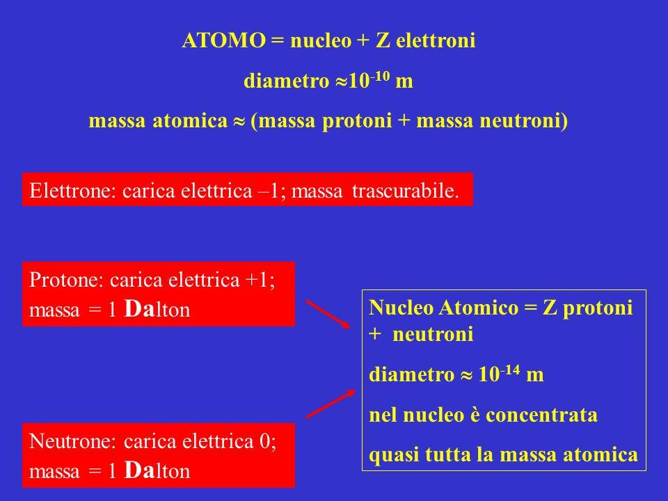 Elettrone: carica elettrica –1; massa trascurabile. Protone: carica elettrica +1; massa = 1 Da lton Neutrone: carica elettrica 0; massa = 1 Da lton Nu