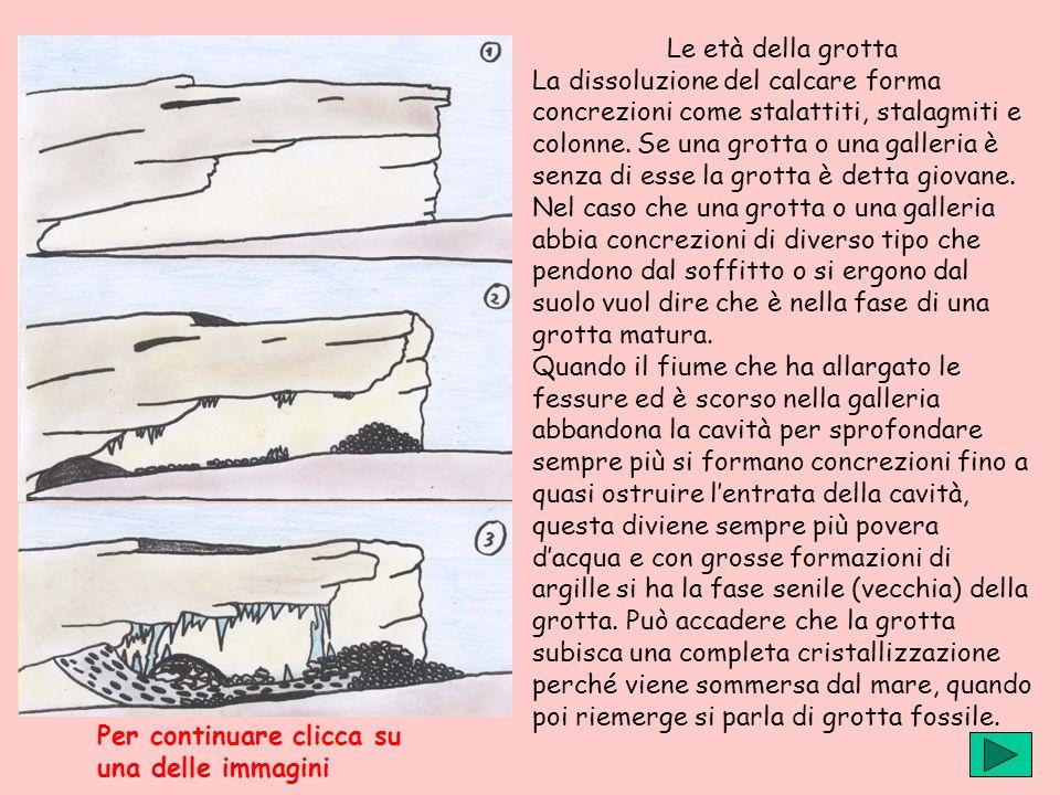 Le età della grotta La dissoluzione del calcare forma concrezioni come stalattiti, stalagmiti e colonne. Se una grotta o una galleria è senza di esse