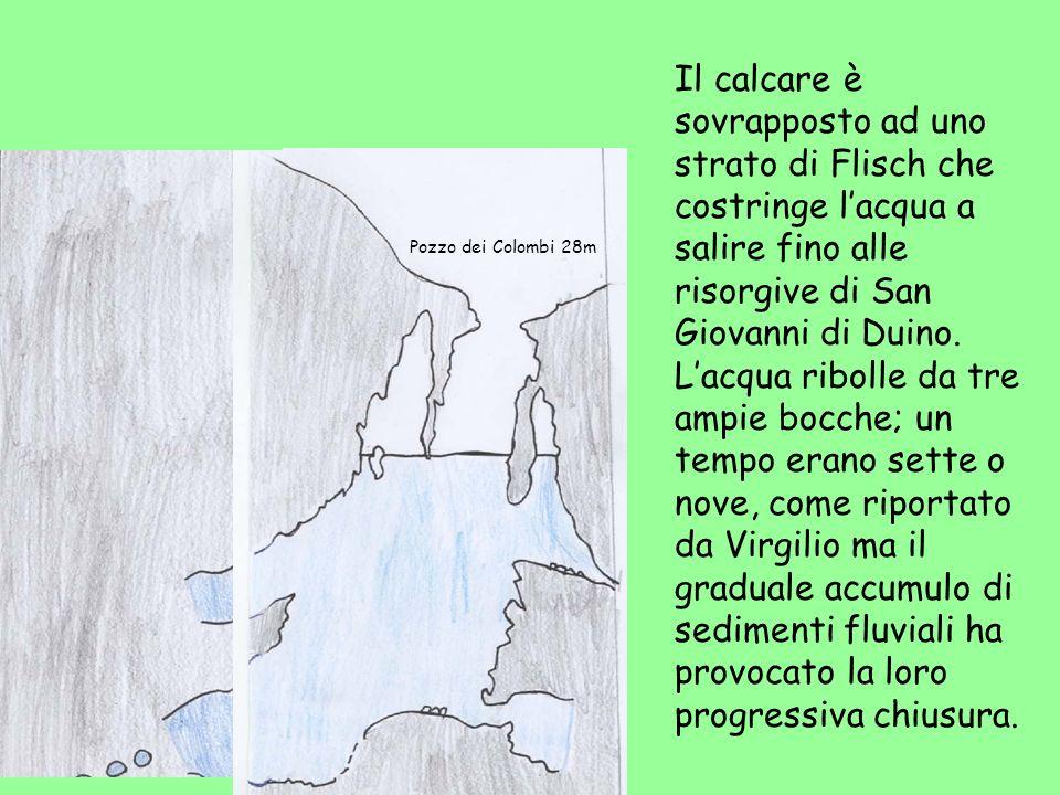 Il calcare è sovrapposto ad uno strato di Flisch che costringe lacqua a salire fino alle risorgive di San Giovanni di Duino. Lacqua ribolle da tre amp