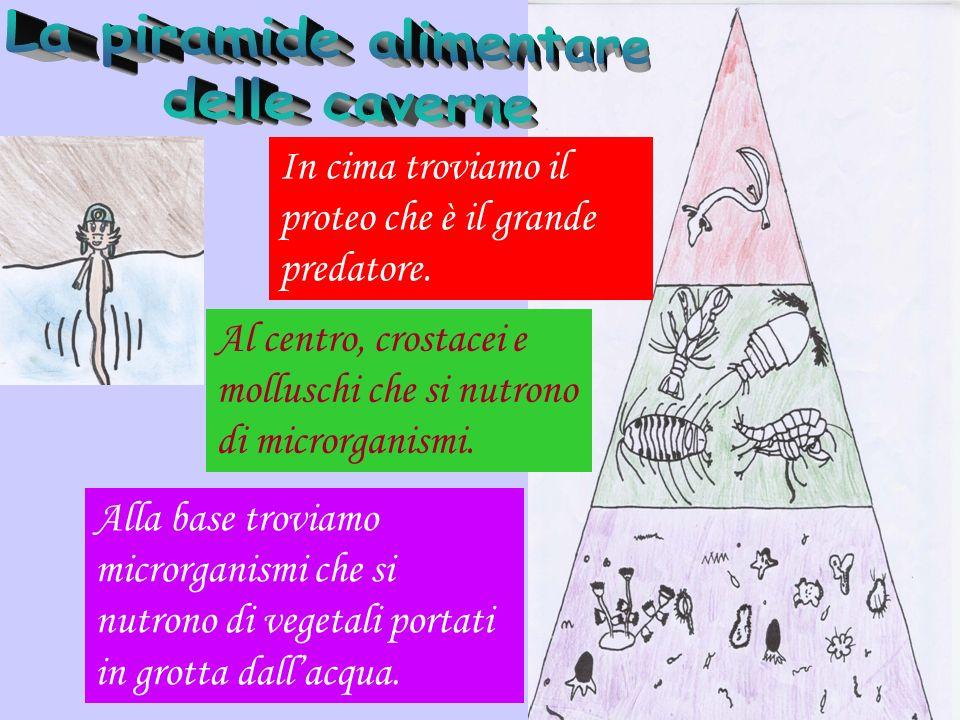 Industria neolitica dal n.1 al n. 10 sono resti provenienti dalla Grotta degli Zingari; dal n.