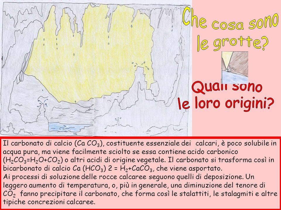 Orso delle caverne (Ursus spelaeus) Arto di Ursus spelaeus Denti di Ursus spelaeus