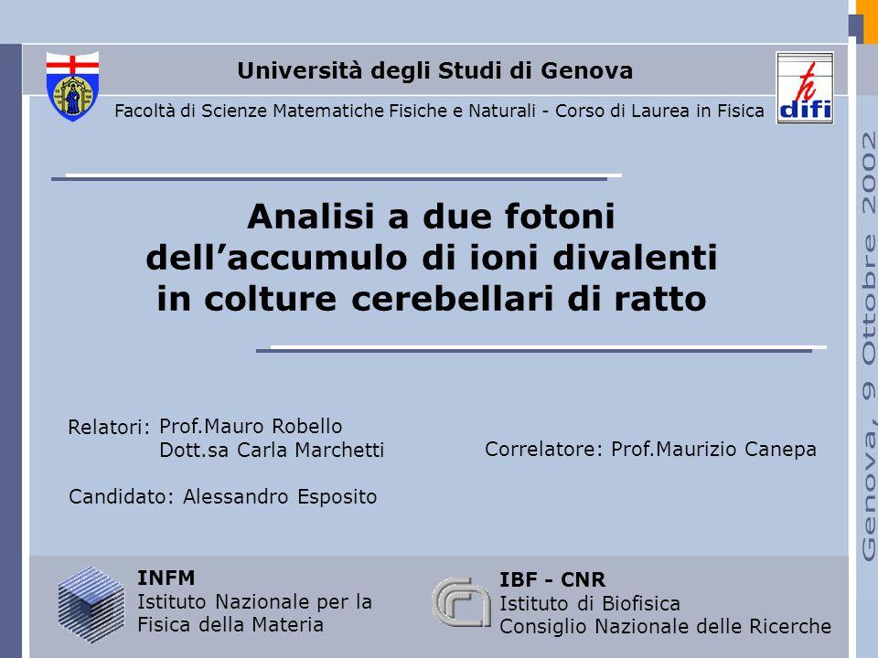 Analisi a due fotoni dellaccumulo di ioni divalenti in colture cerebellari di ratto Candidato: Alessandro Esposito INFM Istituto Nazionale per la Fisi