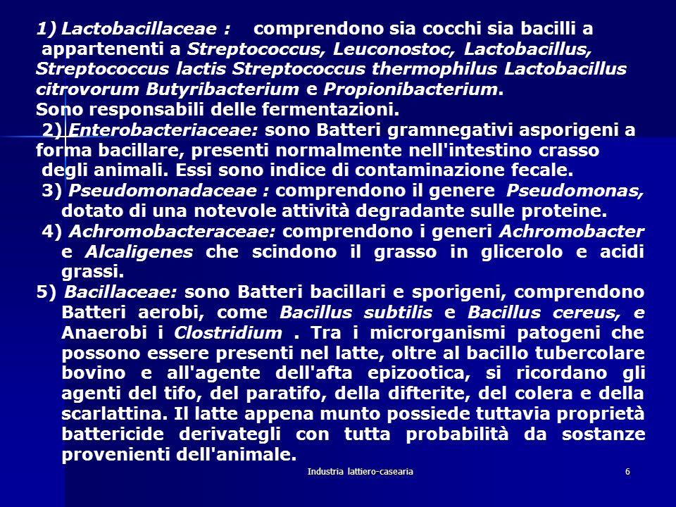 Industria lattiero-casearia6 1)Lactobacillaceae : comprendono sia cocchi sia bacilli a appartenenti a Streptococcus, Leuconostoc, Lactobacillus, Strep
