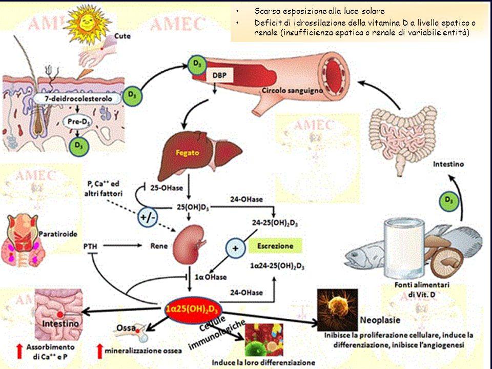 Scarsa esposizione alla luce solare Deficit di idrossilazione della vitamina D a livello epatico o renale (insufficienza epatica o renale di variabile