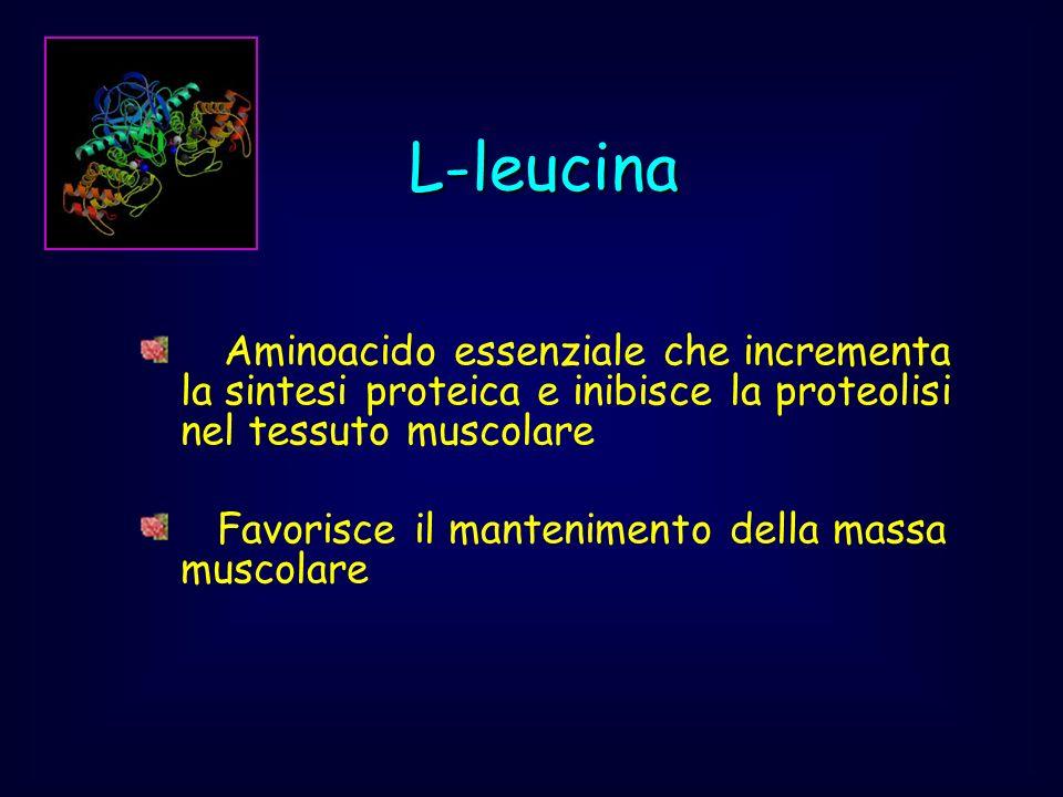Aminoacido essenziale che incrementa la sintesi proteica e inibisce la proteolisi nel tessuto muscolare Favorisce il mantenimento della massa muscolar