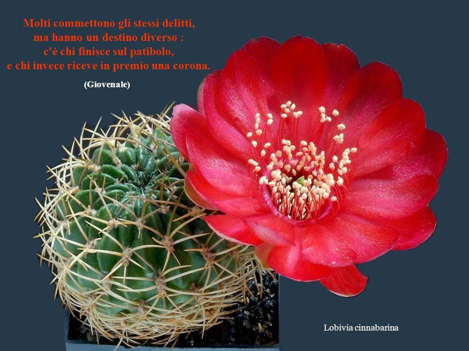 Ferobergia hybride Offrire amicizia a chi chiede amore è come dare pane a chi muore di sete. (Ovidio)