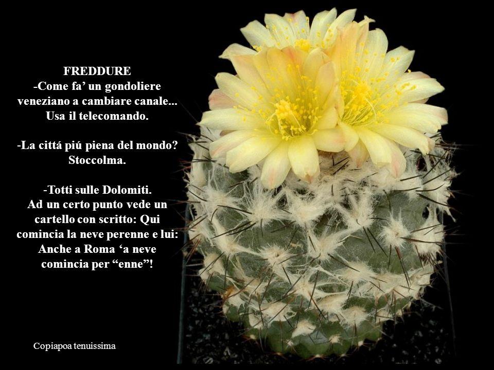 Mammillaria slevinii Marito chiede alla moglie: -Vuoi trascorrere un bel week end.