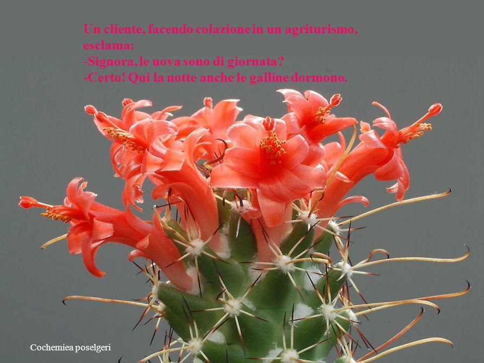 Ehilà, mentre ammiramo la stupenda bellezza dei fiori di cactus divertiamoci leggendo qualche barzelletta, frase pungente, colmi,battute,motti...e quantaltro.