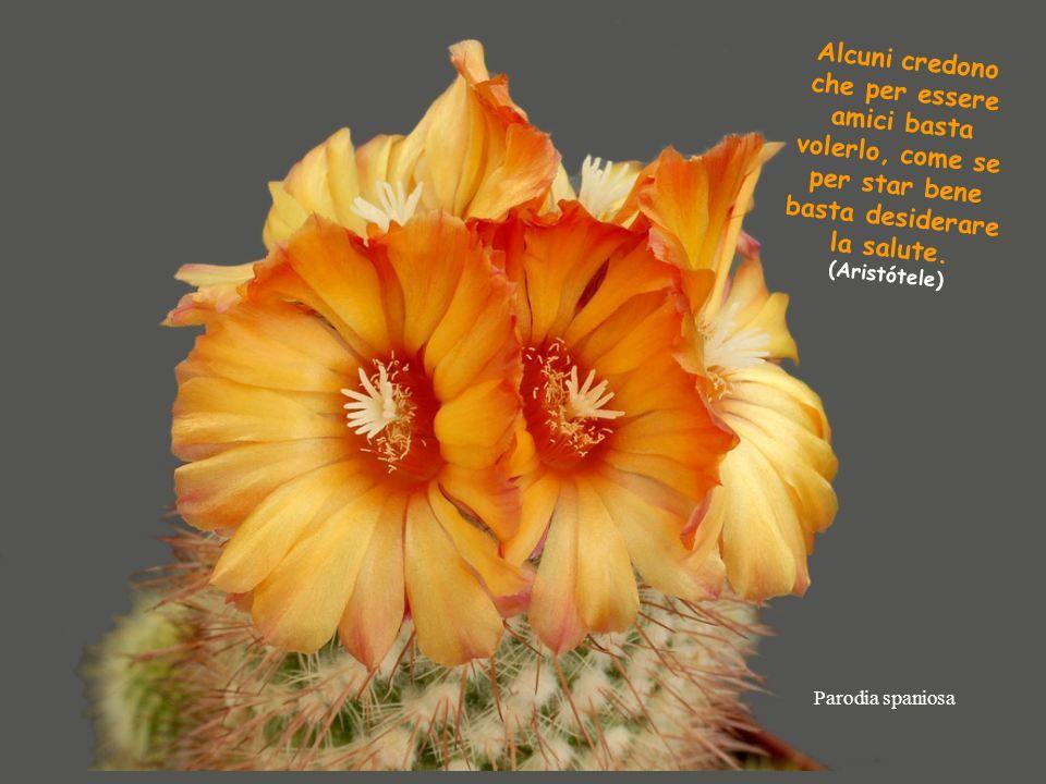 Ortegocactus macdougallii DONNE -Le donne non si picchiano nemmeno con un fiore ma se necessario preferite una rosa. A buon inteditor... -Sapete qualè