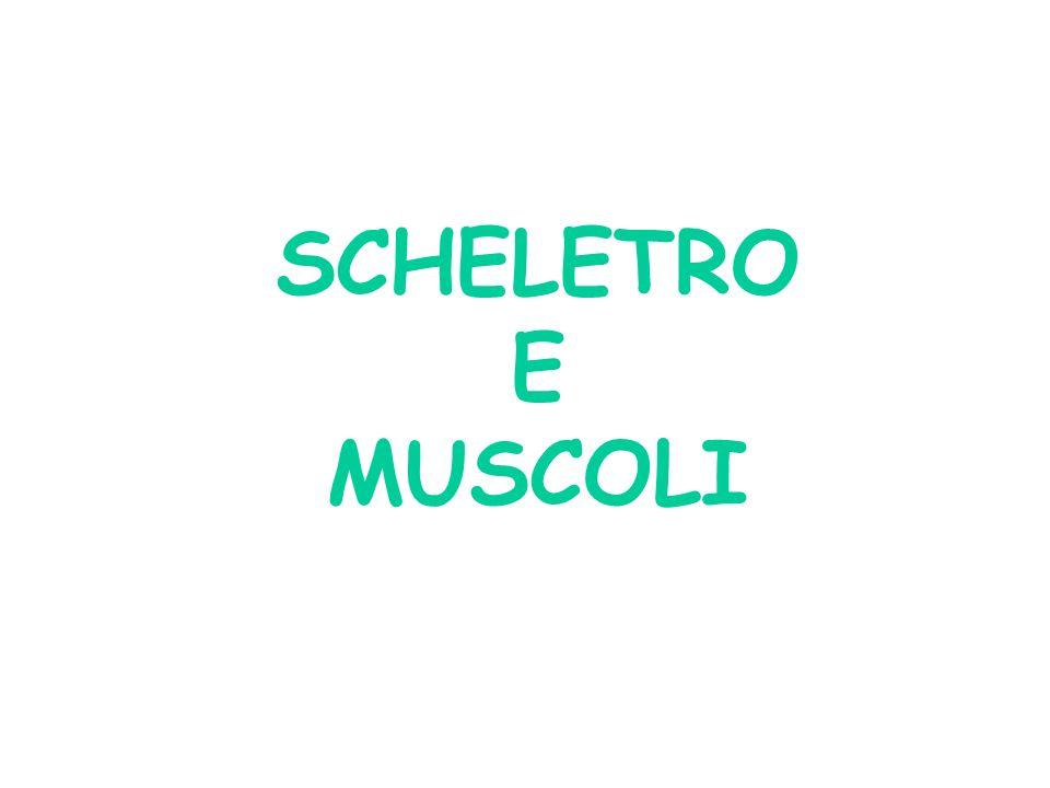 SCHELETRO E MUSCOLI