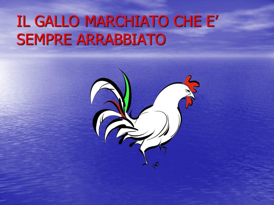 IL GALLO MARCHIATO CHE E SEMPRE ARRABBIATO