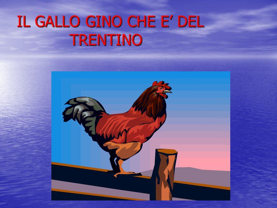 IL GALLO GINO CHE E DEL TRENTINO