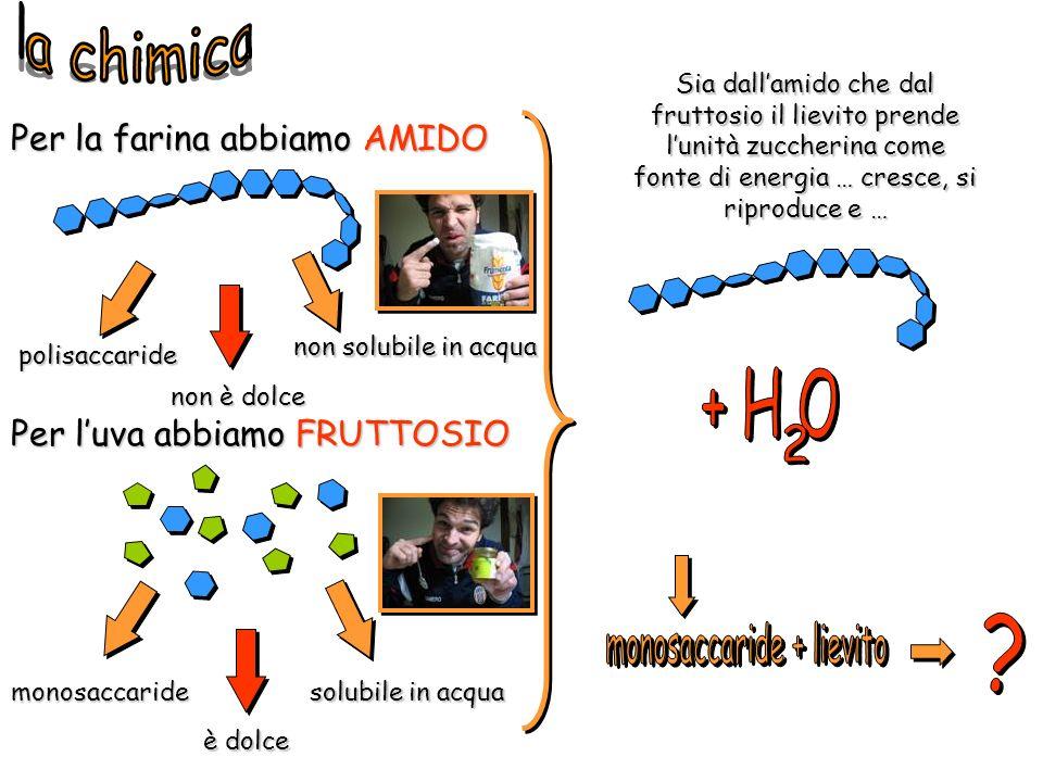 Per la farina abbiamo AMIDO Per luva abbiamo FRUTTOSIO polisaccaride monosaccaride non solubile in acqua solubile in acqua Sia dallamido che dal frutt