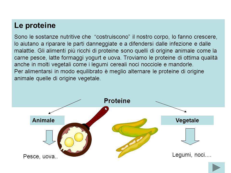Le proteine Sono le sostanze nutritive che costruiscono il nostro corpo, lo fanno crescere, lo aiutano a riparare le parti danneggiate e a difendersi