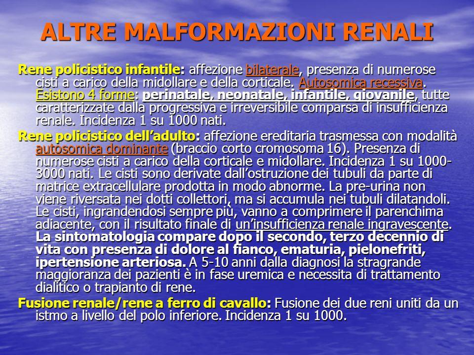 Rene policistico infantile: affezione bilaterale, presenza di numerose cisti a carico della midollare e della corticale. Autosomica recessiva. Esiston