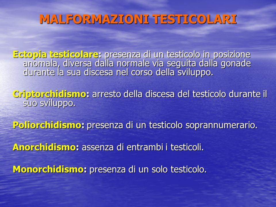 Ectopia testicolare: presenza di un testicolo in posizione anomala, diversa dalla normale via seguita dalla gonade durante la sua discesa nel corso de