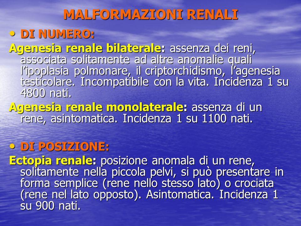 MALFORMAZIONI RENALI DI NUMERO: DI NUMERO: Agenesia renale bilaterale: assenza dei reni, associata solitamente ad altre anomalie quali lipoplasia polm