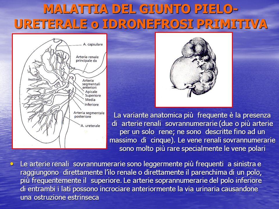 Le arterie renali sovrannumerarie sono leggermente più frequenti a sinistra e raggiungono direttamente lilo renale o direttamente il parenchima di un