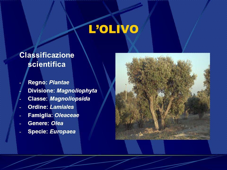 LOLIO DOLIVA NELLA STORIA Lolio doliva è da secoli parte integrante dellalimentazione, ma anche della storia e della cultura dei paesi mediterranei tantè che già nel V secolo a.C.