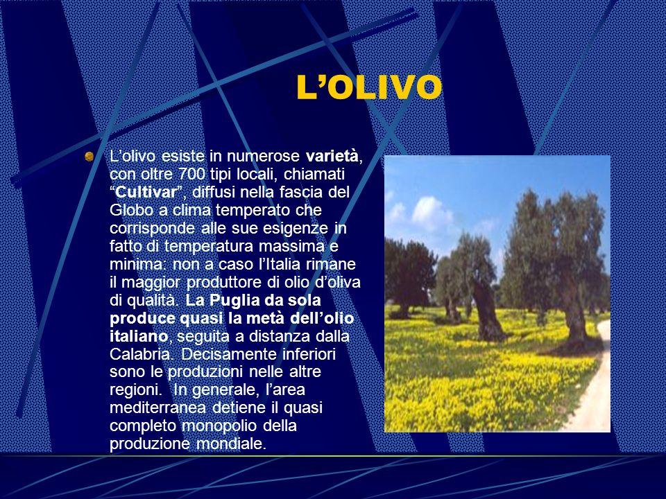 LOLIVO Classificazione scientifica - Regno: Plantae - Divisione: Magnoliophyta - Classe: Magnoliopsida - Ordine: Lamiales - Famiglia: Oleaceae - Genere: Olea - Specie: Europaea