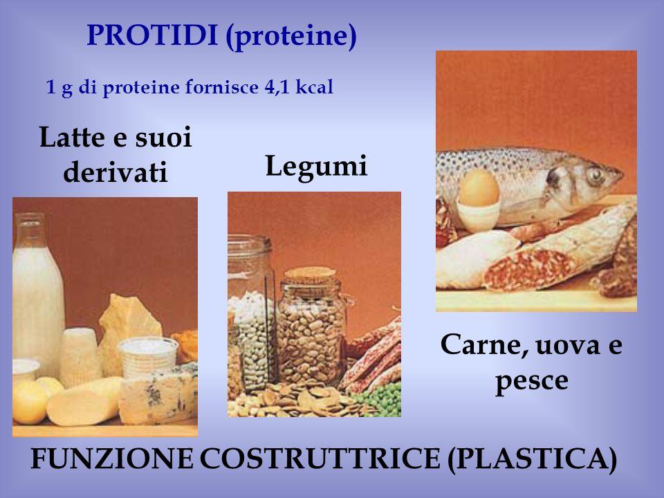 Carne, uova e pesce Latte e suoi derivati Legumi PROTIDI (proteine) 1 g di proteine fornisce 4,1 kcal FUNZIONE COSTRUTTRICE (PLASTICA)