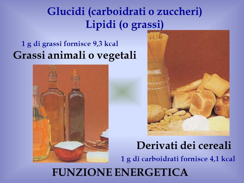 Derivati dei cereali Grassi animali o vegetali Glucidi (carboidrati o zuccheri) Lipidi (o grassi) 1 g di carboidrati fornisce 4,1 kcal 1 g di grassi f