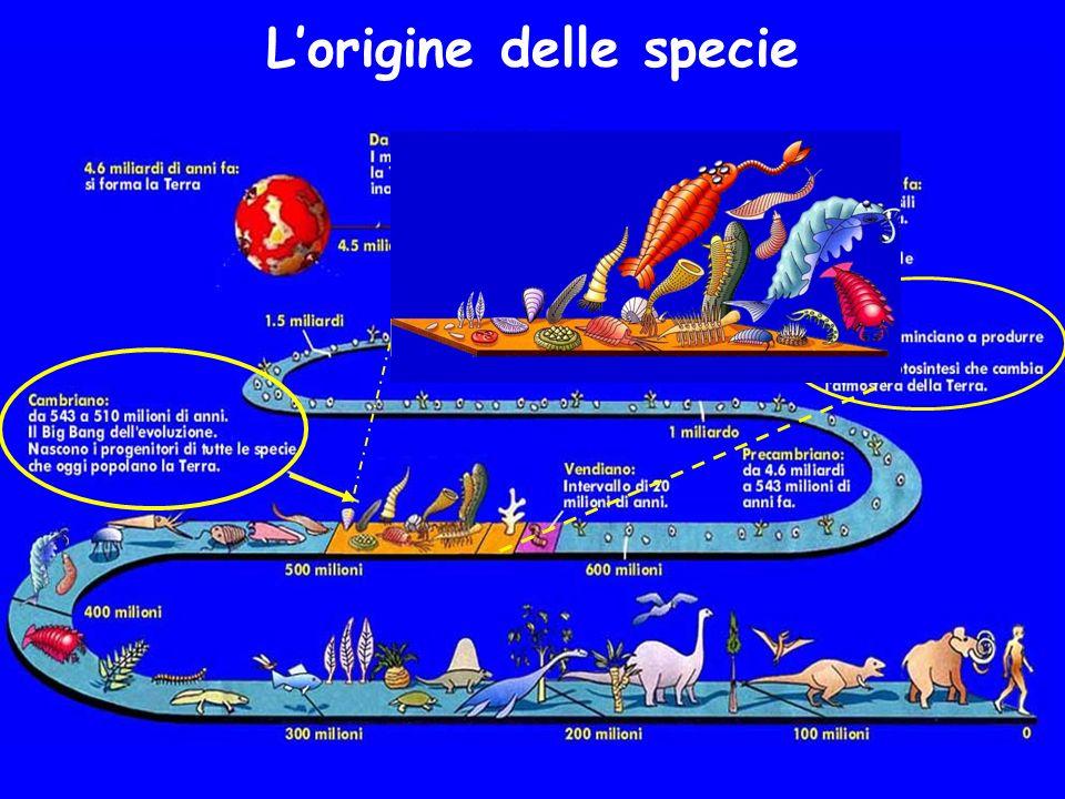 Lorigine delle specie