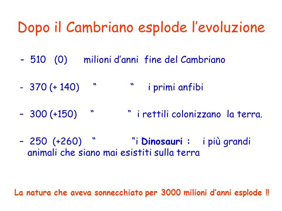 Dopo il Cambriano esplode levoluzione - 510 (0) milioni danni fine del Cambriano - 370 (+ 140) i primi anfibi – 300 (+150) i rettili colonizzano la terra.