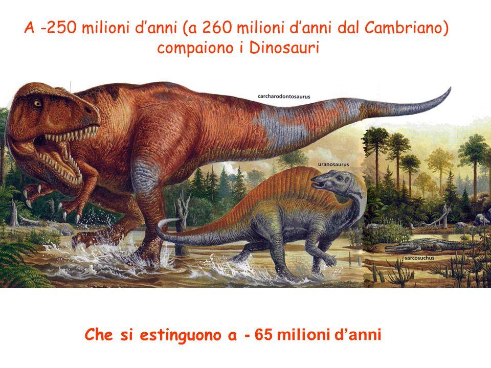 A -250 milioni danni (a 260 milioni danni dal Cambriano) compaiono i Dinosauri Che si estinguono a - 65 milioni danni