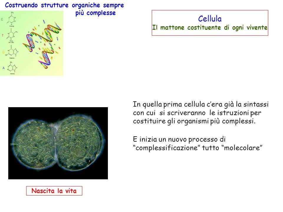 Nascita la vita Costruendo strutture organiche sempre più complesse Cellula Il mattone costituente di ogni vivente In quella prima cellula cera già la sintassi con cui si scriveranno le istruzioni per costituire gli organismi più complessi.