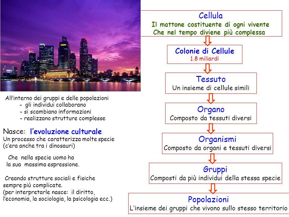 Cellula Il mattone costituente di ogni vivente Che nel tempo diviene più complessa Colonie di Cellule 1.8 miliardi Tessuto Un insieme di cellule simili Organo Composto da tessuti diversi Organismi Composto da organi e tessuti diversi Gruppi Composti da più individui della stessa specie Popolazioni Linsieme dei gruppi che vivono sullo stesso territorio Allinterno dei gruppi e delle popolazioni - gli individui collaborano - si scambiano informazioni - realizzano strutture complesse Nasce: levoluzione culturale Un processo che caratterizza molte specie (cera anche tra i dinosauri) Che nella specie uomo ha la sua massima espressione.