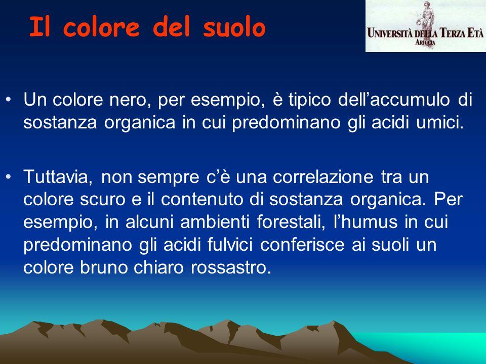 Un colore nero, per esempio, è tipico dellaccumulo di sostanza organica in cui predominano gli acidi umici. Tuttavia, non sempre cè una correlazione t
