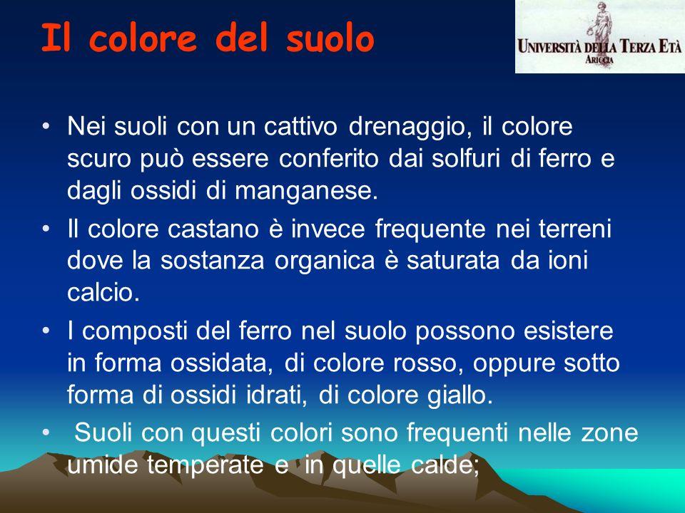 Nei suoli con un cattivo drenaggio, il colore scuro può essere conferito dai solfuri di ferro e dagli ossidi di manganese. Il colore castano è invece