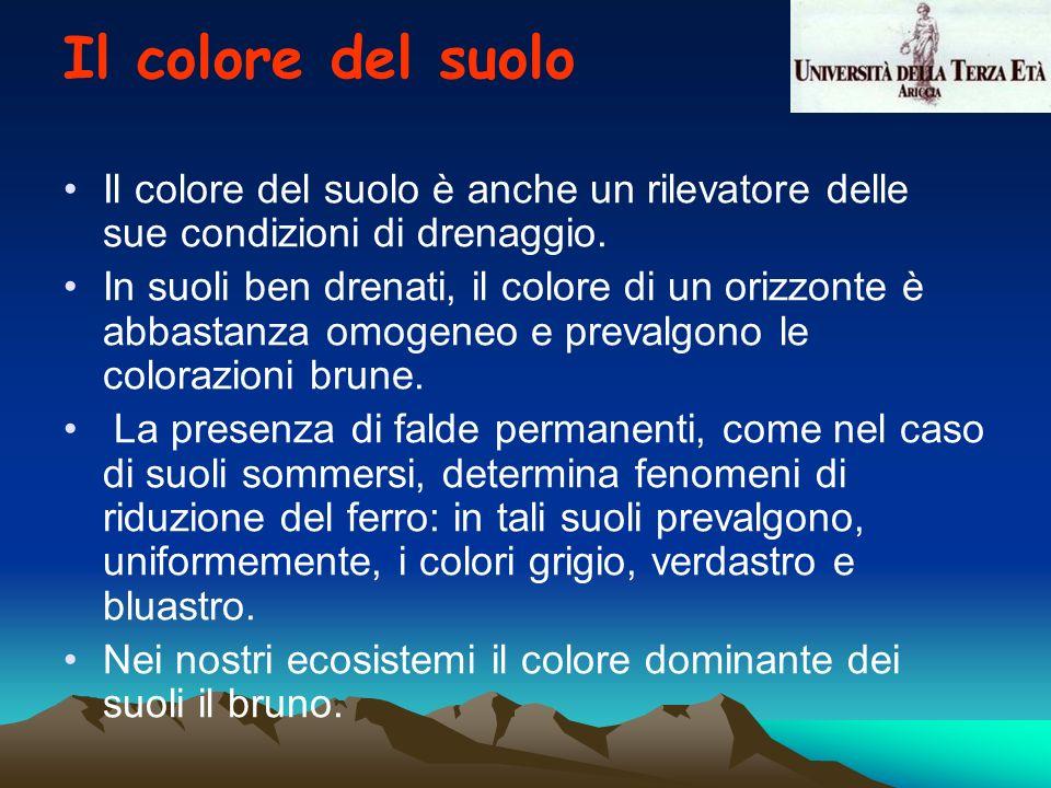 Il colore del suolo è anche un rilevatore delle sue condizioni di drenaggio. In suoli ben drenati, il colore di un orizzonte è abbastanza omogeneo e p